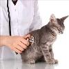 Ветеринарные клиники в Комсомольском